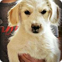 Adopt A Pet :: Elle Mae - Tijeras, NM