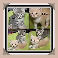 Adopt A Pet :: Elliott & Olivia (In Foster) - Marietta, OH