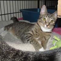 Adopt A Pet :: Stray-W JeDi Ct-Avail 8/21 - Inverness, FL