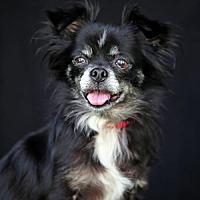 Adopt A Pet :: Robin - SAN PEDRO, CA
