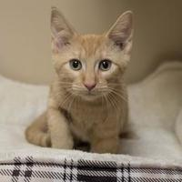 Adopt A Pet :: Marigold - Elk Grove Village, IL
