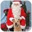 Photo 3 - Shar Pei/Labrador Retriever Mix Dog for adoption in Dallas/Ft. Worth, Texas - Molly in San Antonio