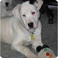 Adopt A Pet :: Brando - Evansville, IN