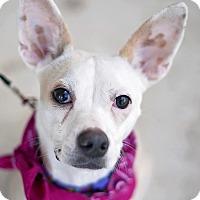 Adopt A Pet :: Bella - Kingwood, TX