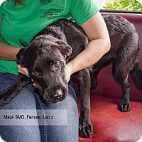 Adopt A Pet :: Maui - Bristol, TN