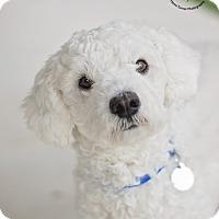 Adopt A Pet :: Mr. Bubbles - Kingwood, TX
