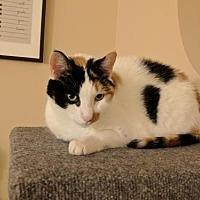 Adopt A Pet :: Mhia - Oviedo, FL