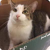 Adopt A Pet :: Secret - Baltimore, MD