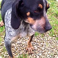 Adopt A Pet :: Priscilla - Metamora, IN