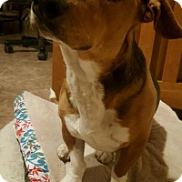 Adopt A Pet :: Sweet Buster!! Such a Good Boy!! - Albuquerque, NM