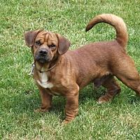 Adopt A Pet :: Freddie - Canton, OH