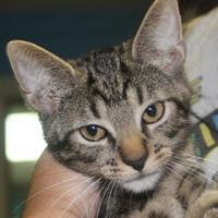 Adopt A Pet :: Marauder - Robinson, IL