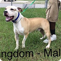 Adopt A Pet :: Kingdom - Waycross, GA