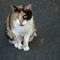 Adopt A Pet :: Lady - Central Islip, NY