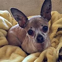 Adopt A Pet :: Ruby - Fresno, CA