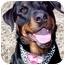 Photo 1 - Rottweiler Dog for adoption in Huntington, New York - Sally