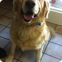 Adopt A Pet :: Boomer - Foster, RI