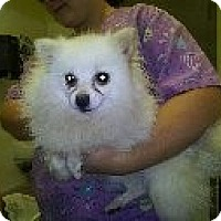 Adopt A Pet :: Roxie - North Benton, OH