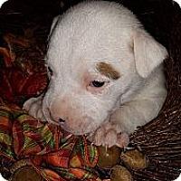 Adopt A Pet :: Iris - Roaring Spring, PA