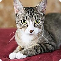 Adopt A Pet :: Bouquet - Eagan, MN