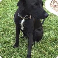 Adopt A Pet :: Decker - La Habra Heights, CA