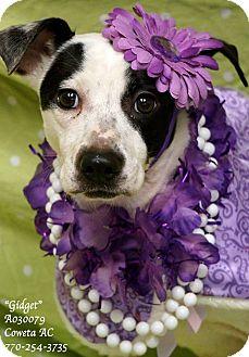 Pointer Mix Dog for adoption in Newnan City, Georgia - Gidget