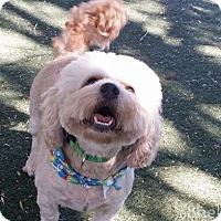 Adopt A Pet :: Bon Bon - Meridian, ID