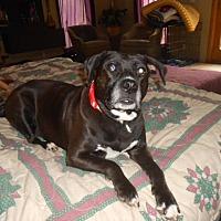Adopt A Pet :: Gracie - North Jackson, OH