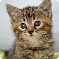 Adopt A Pet :: Mocha - Greenfield, IN