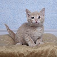 Adopt A Pet :: Spark - Chippewa Falls, WI