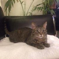 Adopt A Pet :: Sweetie - Toronto, ON