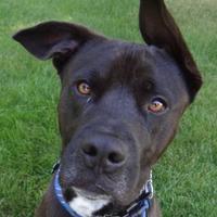 Adopt A Pet :: Jetter - Yakima, WA