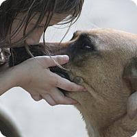 Adopt A Pet :: Savvy - Naugatuck, CT