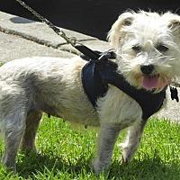 Adopt A Pet :: Lorna - West Los Angeles, CA