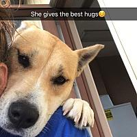 Adopt A Pet :: SUKI - Brattleboro, VT