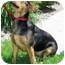 Photo 4 - Beagle/Shepherd (Unknown Type) Mix Dog for adoption in Osseo, Minnesota - Lucy