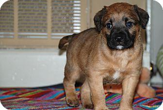 Chow Chow Mix Puppy for adoption in Georgetown, South Carolina - Django