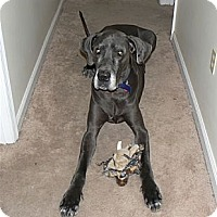 Adopt A Pet :: Cole - Hanover, MD