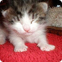 Adopt A Pet :: Ming - Xenia, OH