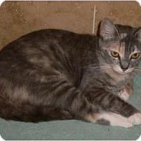Adopt A Pet :: Jazzy - lake elsinore, CA