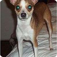 Adopt A Pet :: Glory - P, ME