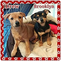 Adopt A Pet :: DREW AND BROOKLYN - Fort Worth, TX