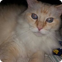 Adopt A Pet :: Buddy - Davis, CA