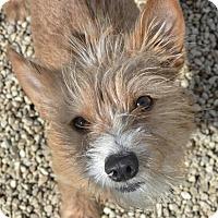 Adopt A Pet :: Kyle - Meridian, ID