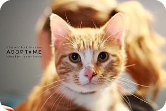 Domestic Shorthair Cat for adoption in Edwardsville, Illinois - Ceasar