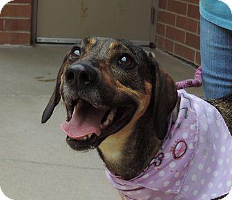 Shepherd (Unknown Type) Mix Dog for adoption in Sioux City, Iowa - ABBEY