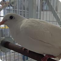 Adopt A Pet :: Peace and Harry - Grandview, MO