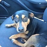 Adopt A Pet :: Ryker - Duchess, AB