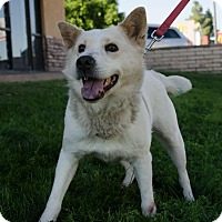 Adopt A Pet :: ADELINA - Phoenix, AZ