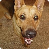 Adopt A Pet :: Diesel - Dripping Springs, TX
